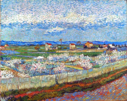La Crau With Peach Trees In Bloom
