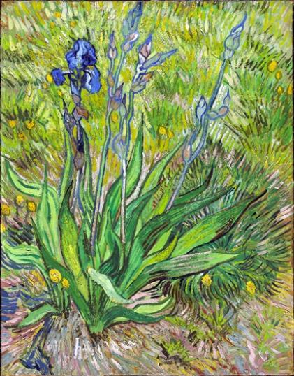 Iris, 1889